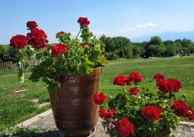 цветни-градини-за-сватби-софия
